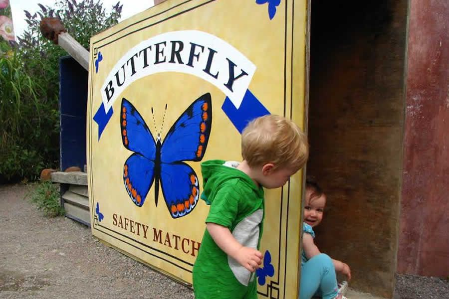 Butterfly World - St Albans - image 2